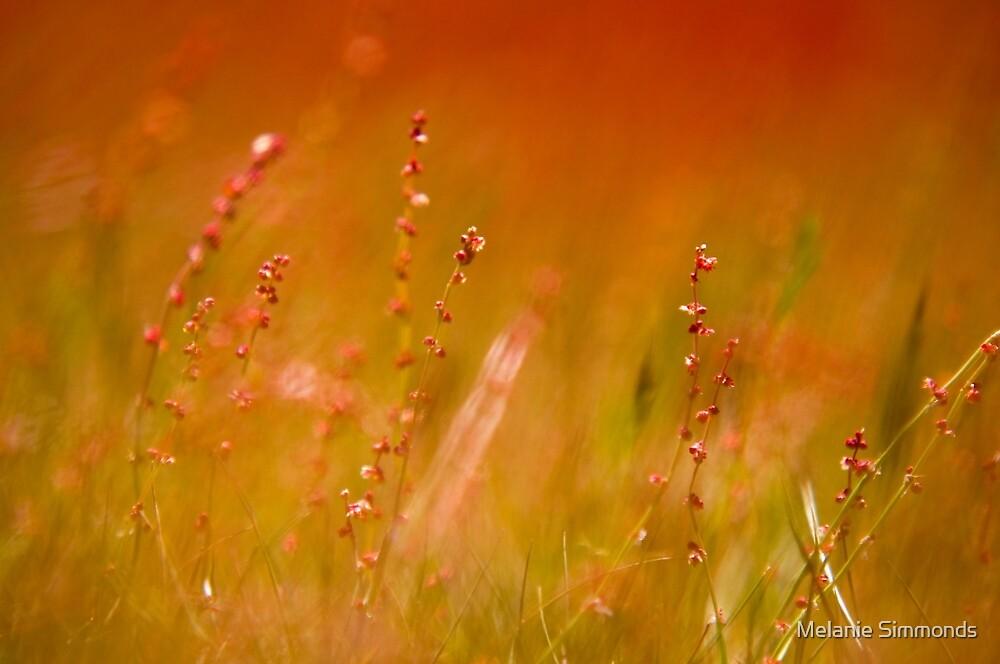 Sunset Fields by Melanie Simmonds