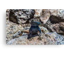 Lizard in Blue Canvas Print