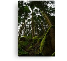Landscape mossy rock and soaring pine trees Canvas Print