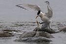 Mating Pair 2 by Werner Padarin