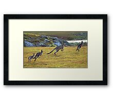 Eastern Grey Kangaroos Framed Print