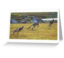 Eastern Grey Kangaroos Greeting Card