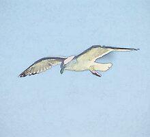 Seagull by Gail Falcon