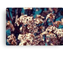 Spring Blossoms Canvas Print