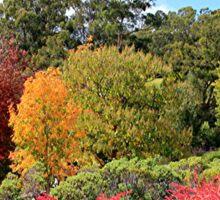 Autumn splendour, Adelaide Hills, South Australia Sticker