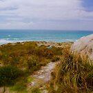 To Surf Beach, North island New Zealand by Barbara  Brown