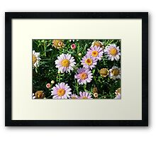 Beautiful light pink flowers natural background. Framed Print