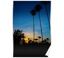 Palm Trees During a Sunset Poster