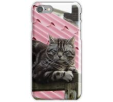 Just a Cat iPhone Case/Skin