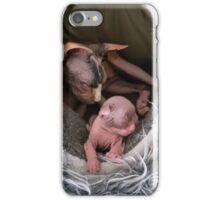 Mom and her kitten sphynx sleeping iPhone Case/Skin
