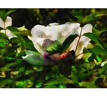 Textured Nature Photographic Print