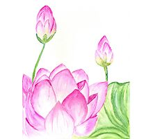 Lotus Flower Watercolor 2 Photographic Print