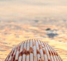 Sunset Sea Shell on the Beach Sticker