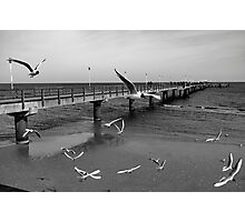 Birds Fly - Ahlbeck Photographic Print