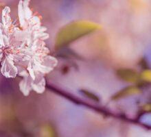 Sakura flowers on branch Sticker