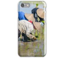 Paddy Field 2 iPhone Case/Skin