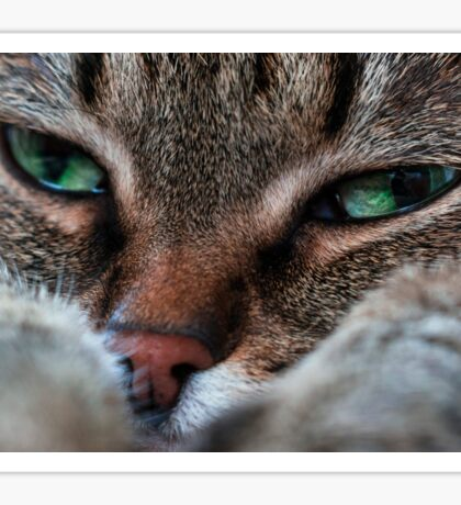 Portrait of a sad cat Sticker