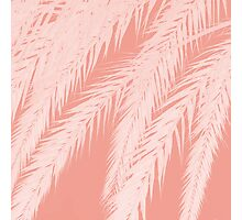 Salmon pastel palm tree leaves silhouette Photographic Print