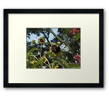 Finch sunflower 2 Framed Print