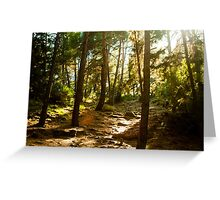 rays of sun shine through forest trees Greeting Card