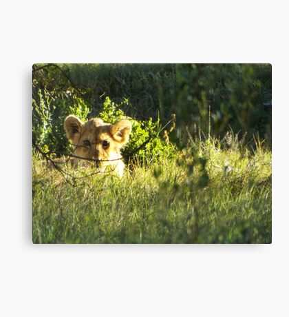 Curiosity didn't kill the cat Canvas Print