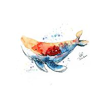 Rainbow Whale  Photographic Print