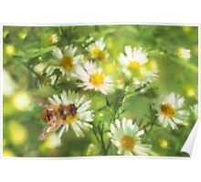 Bumble Bee Daisies Poster