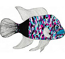 Colorful fish Photographic Print