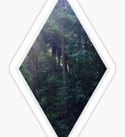 Muir Woods in the a.m. Sticker