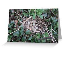 Pheasant eggs Greeting Card