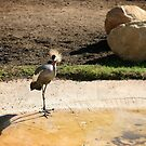 East African Crowned Crane by Henrik Lehnerer