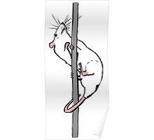 Pole Rat Poster