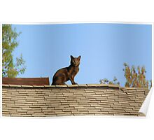Cat on a Warm Shingle Roof Poster