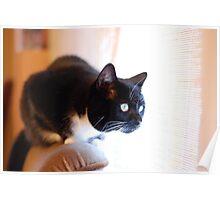 Tussi the Cat vs. Venetian Blinds Poster