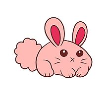 Cute Round Bunny Photographic Print