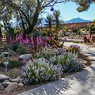 Spring in the Arid Garden by Linda Gregory