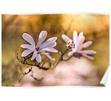 White magnolias Poster