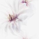 Magnolia Cascade by Rebecca Cozart