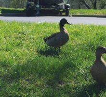 Duck Parking Sticker