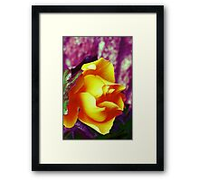Surreal Rose Framed Print