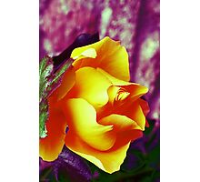 Surreal Rose Photographic Print