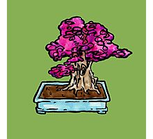 blossom bonsai Photographic Print