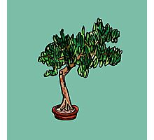 needle bonsai Photographic Print