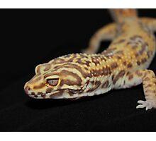 Albino Leopard Gecko Photographic Print