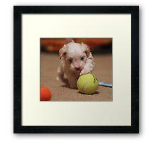 Jagger with Tennis Ball Framed Print