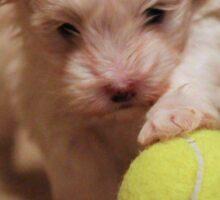 Jagger with Tennis Ball Sticker