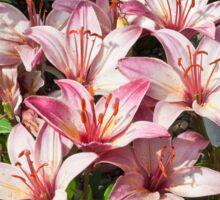 Lilies In Pink Sticker