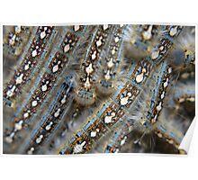 Tent Caterpillars Poster
