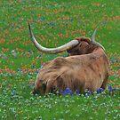 Texas Longhorn in the Wildflowers by Kate Farkas