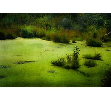 THE SWAMP Photographic Print